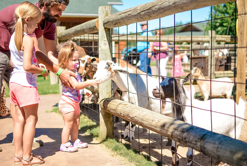 kids playing with goats at lewis farms in new era michigan